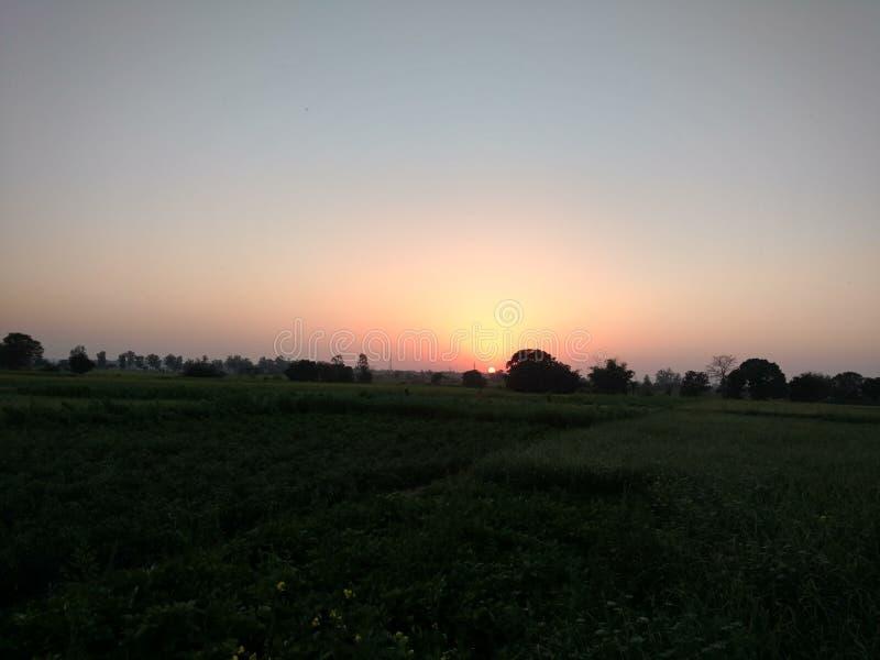 Sun che aumenta con la pianta immagine stock