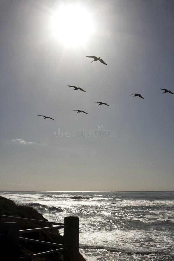Sun che lucida sull'Oceano Pacifico con i gabbiani fotografia stock libera da diritti