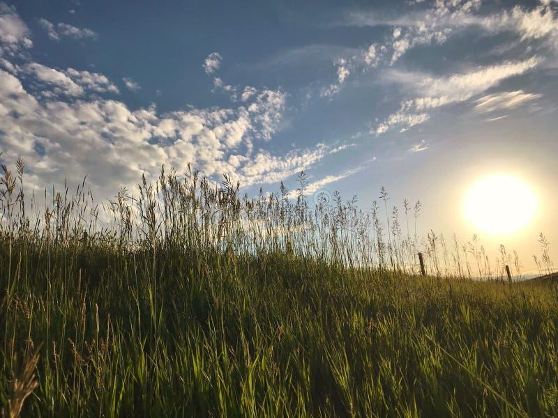 Sun che mette dietro la collina verde erbosa immagini stock libere da diritti