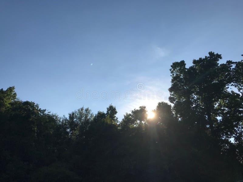Sun che rompe throuhg alcuni alberi immagini stock libere da diritti