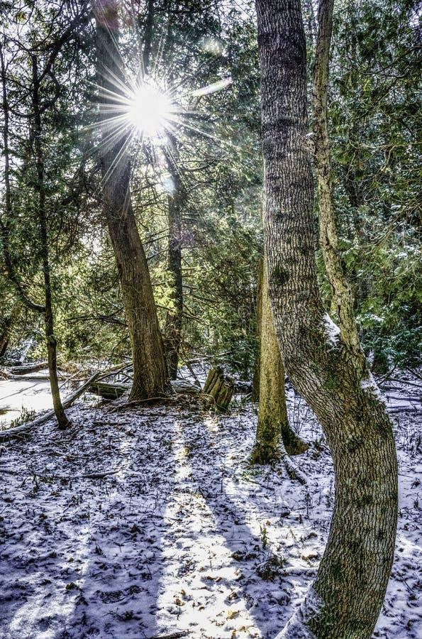 Sun che scoppia attraverso gli alberi nell'inverno immagini stock libere da diritti