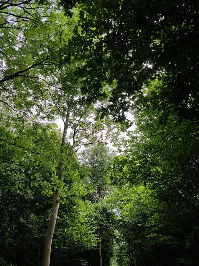 Sun che shinning con la lacuna in alberi immagine stock libera da diritti