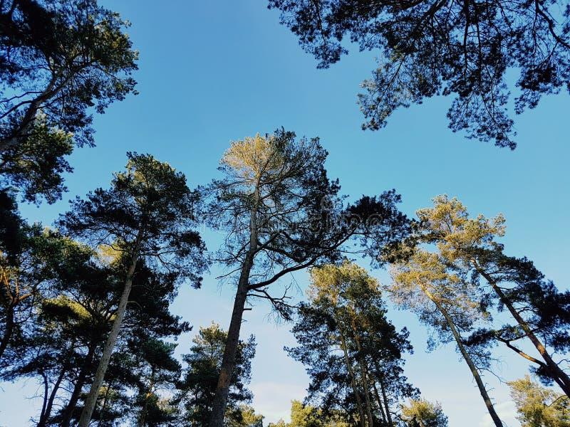 Sun che shinning sulle cime degli alberi fotografia stock libera da diritti