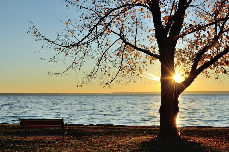The Sun che splende attraverso un albero verso la fine della caduta fotografia stock libera da diritti