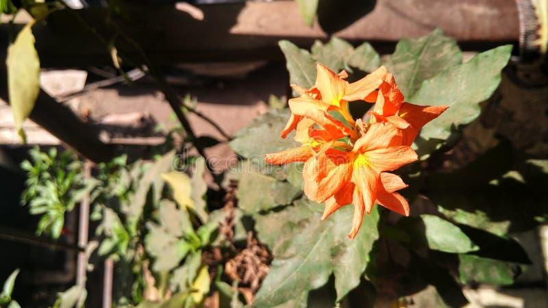 Sun che splende fiore fotografia stock libera da diritti
