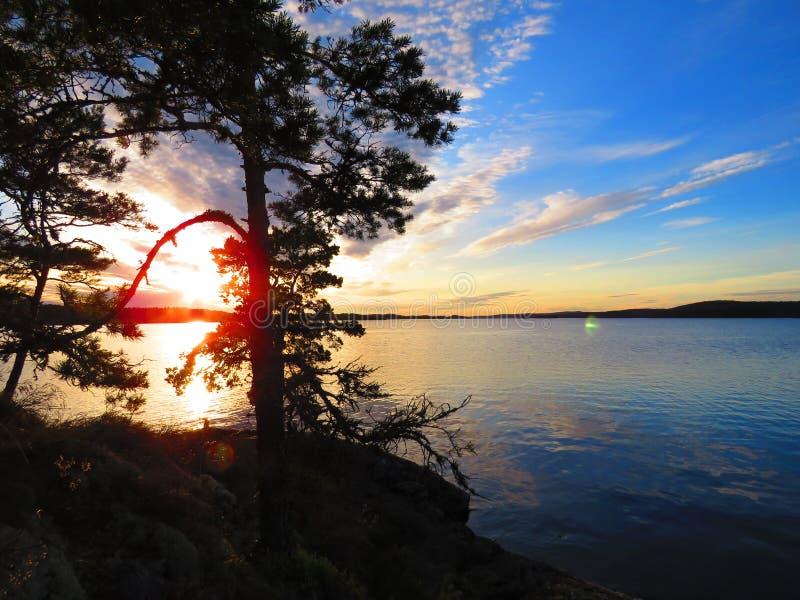 Sun chute derrière un arbre sur une île suédoise images libres de droits