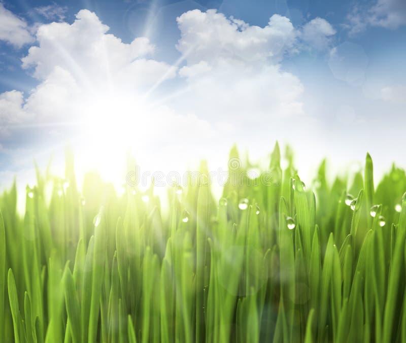 Sun, ciel et herbe avec des baisses images stock