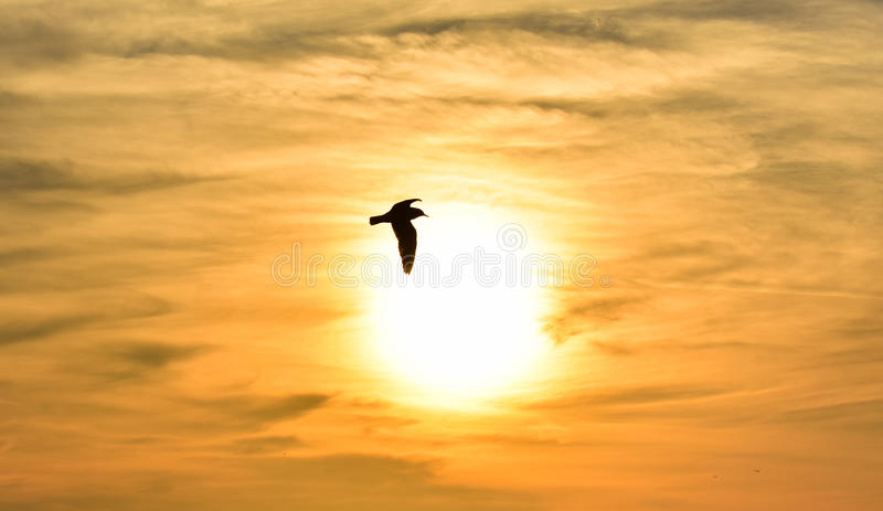 Download Sun Between Clouds And A Seagull Flying. Stock Photo - Image of peace, meditating: 83701250