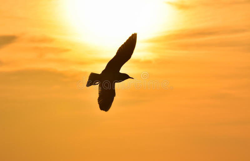 Download Sun Between Clouds And A Seagull Flying. Stock Image - Image: 83701753