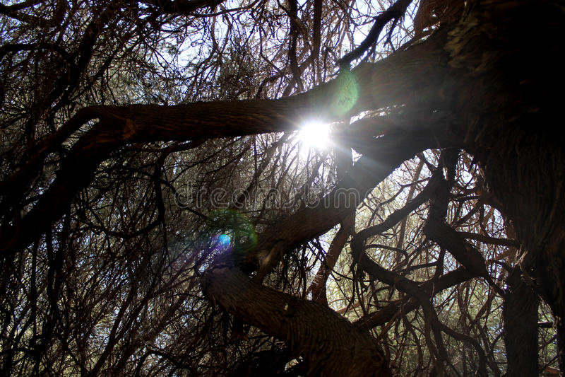 Sun Coming Through Tree Branches royalty free stock images