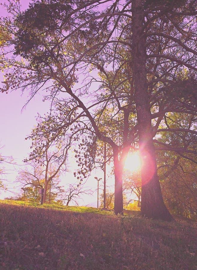 The Sun como eu ando acima do monte imagem de stock