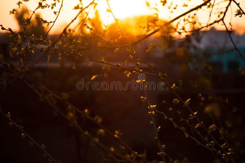Sun con las hojas y los troncos que brillan intensamente fotografía de archivo libre de regalías
