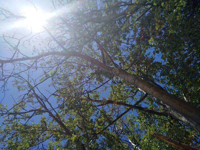 Sun con los árboles verdes y el cielo azul fotografía de archivo