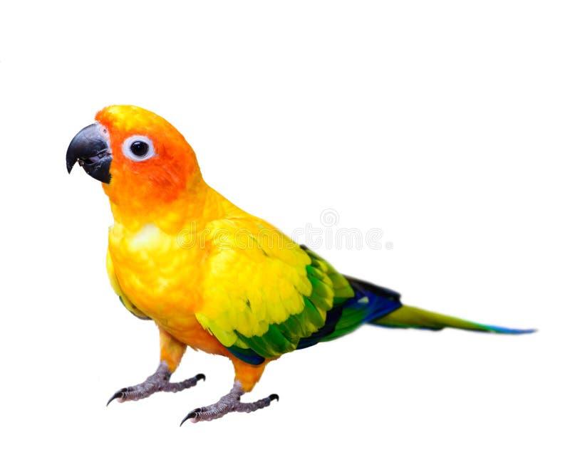 Sun conjura el macaw del loro foto de archivo libre de regalías