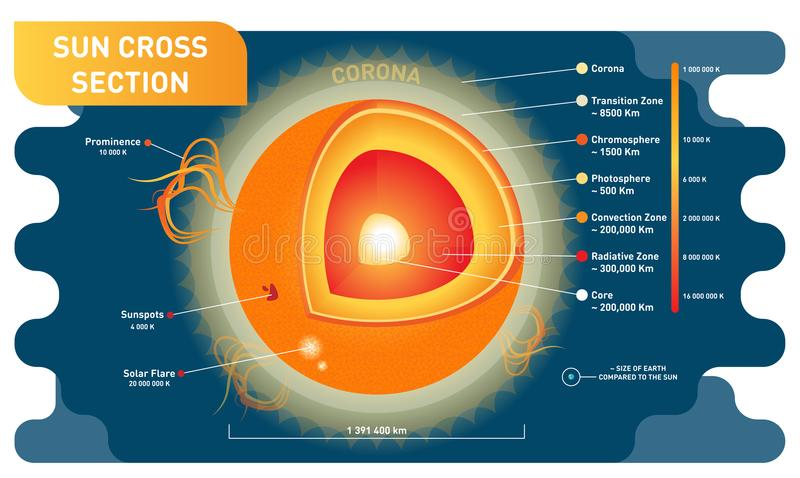 Sun cross section scientific vector illustration diagram with sun inner layers, sunspots, solar flare and prominence. Educational information poster vector illustration