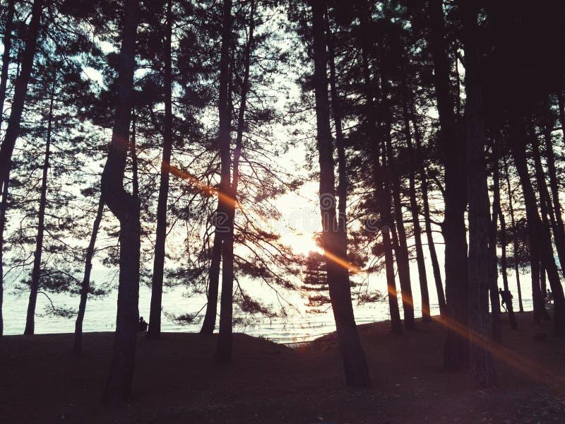 The Sun dans la forêt image stock
