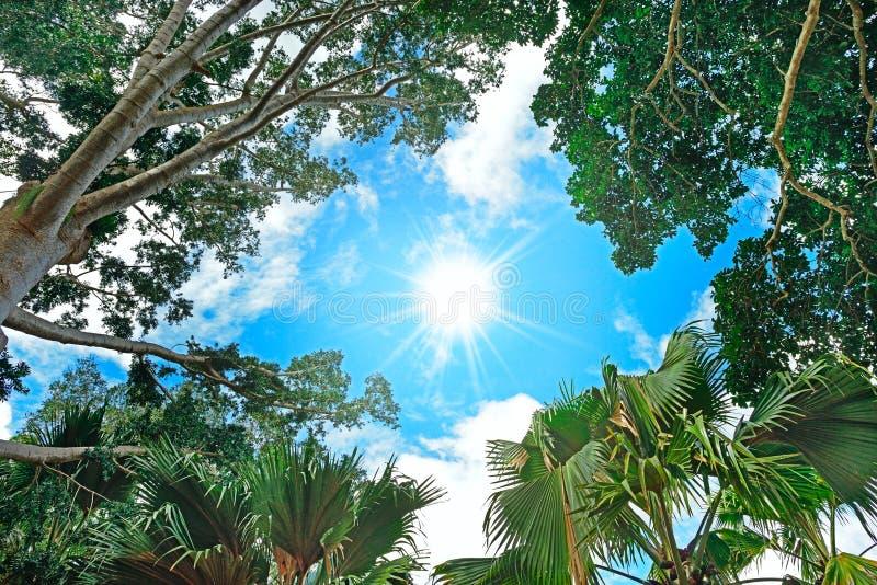 Sun dans le ciel image stock