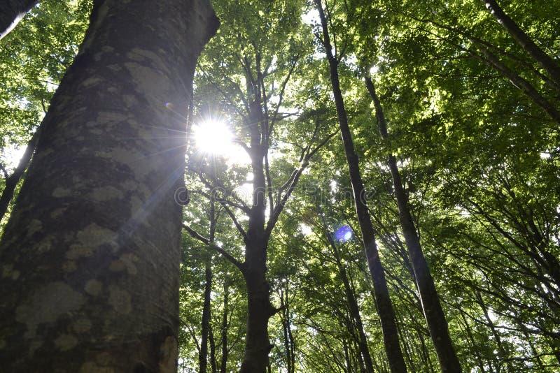 Sun dans les arbres photographie stock