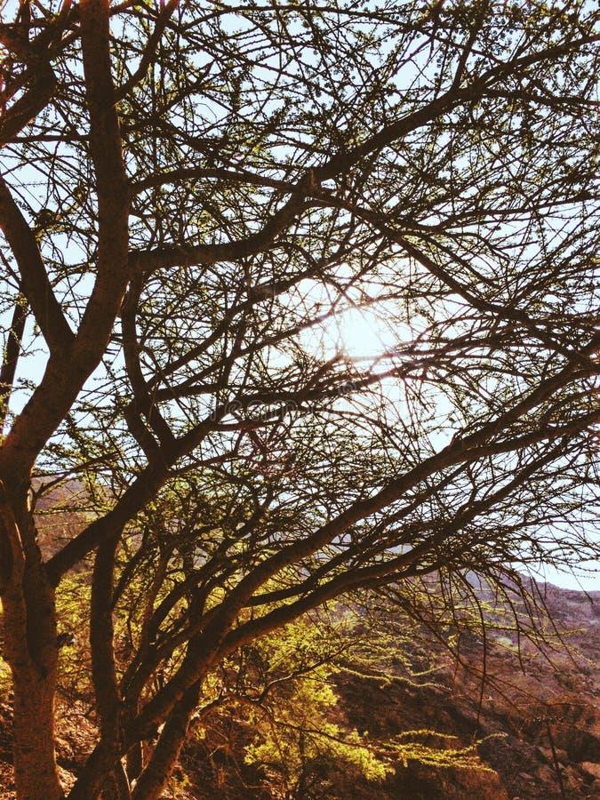 Sun degli alberi della montagna fotografia stock