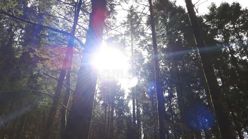 Sun, der durch Bäume scheint stockfoto
