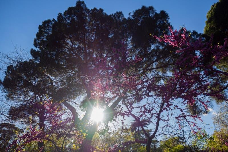 Sun, der durch die Bäume scheint lizenzfreies stockfoto