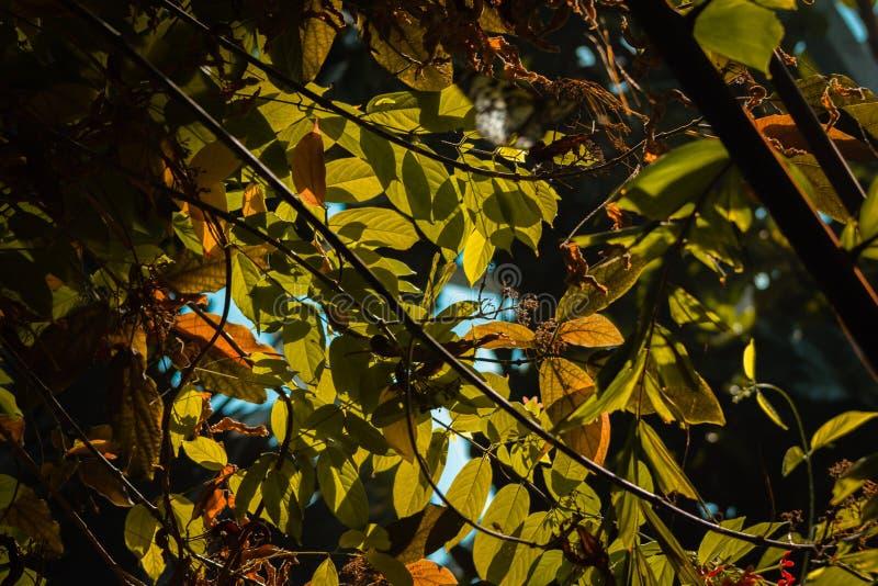 Sun, der durch die Baumblätter im tropischen Gewächshaus bei Frederik Meijer Gardens emporragt stockfotos