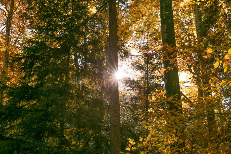 Sun, der durch Forest Trees Foliage im Herbst scheint lizenzfreie stockbilder