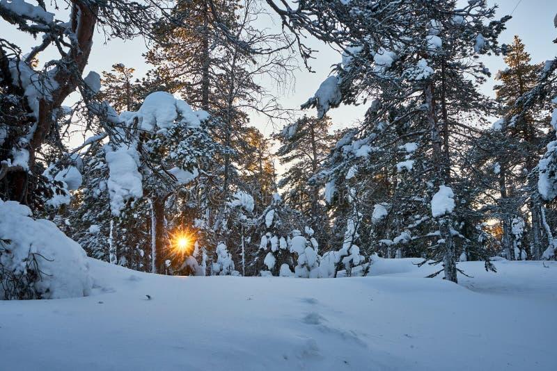 Sun, der durch snnowy Wald in den mouuunntains späht lizenzfreie stockfotografie