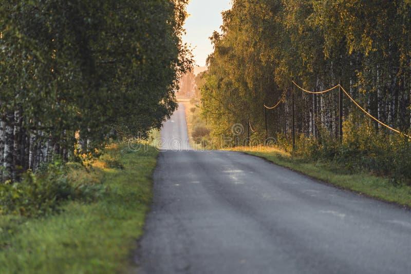 Sun, der am Ende der Straße mit Birken-Gasse außer ihr - Sunny Summer Day, goldene Stunde, teils verwischt scheint stockbilder