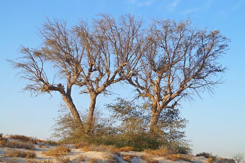 Sun in der Wüste mit einem Baum lizenzfreies stockbild
