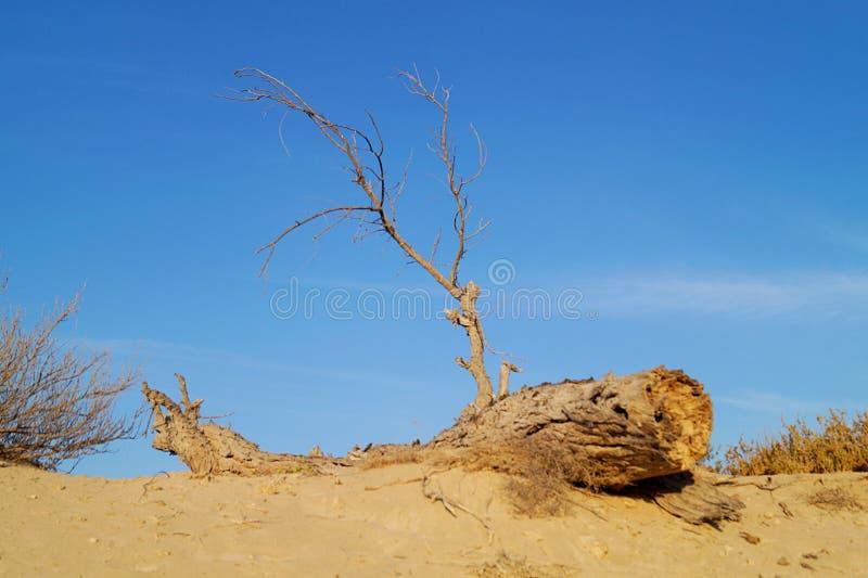 Sun in der Wüste mit einem Baum stockfoto