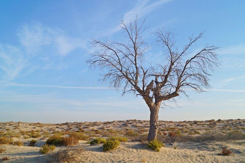 Sun in der Wüste mit einem Baum stockfotos