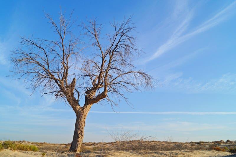Sun in der Wüste mit einem Baum lizenzfreie stockfotografie
