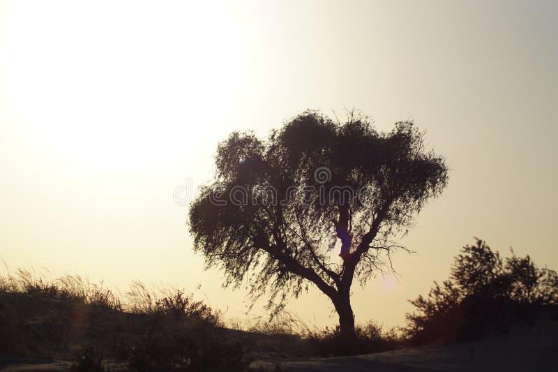 Sun in der Wüste neben einem Baum stockbilder