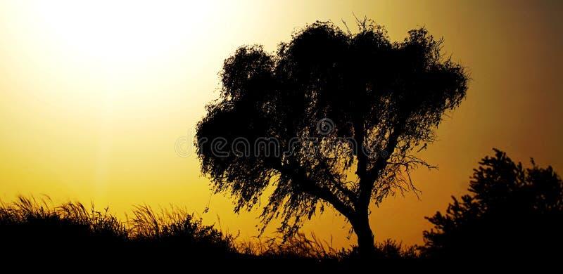 Sun in der Wüste neben einem Baum lizenzfreie stockbilder