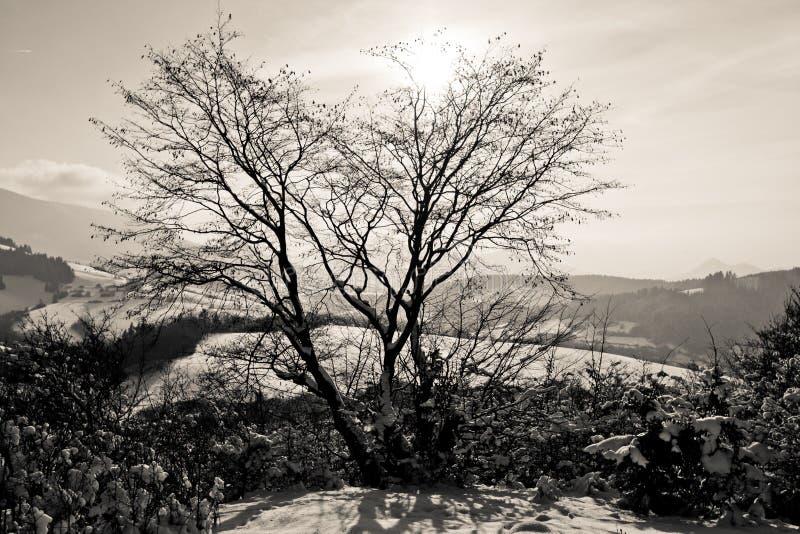 Sun derrière l'arbre photo stock
