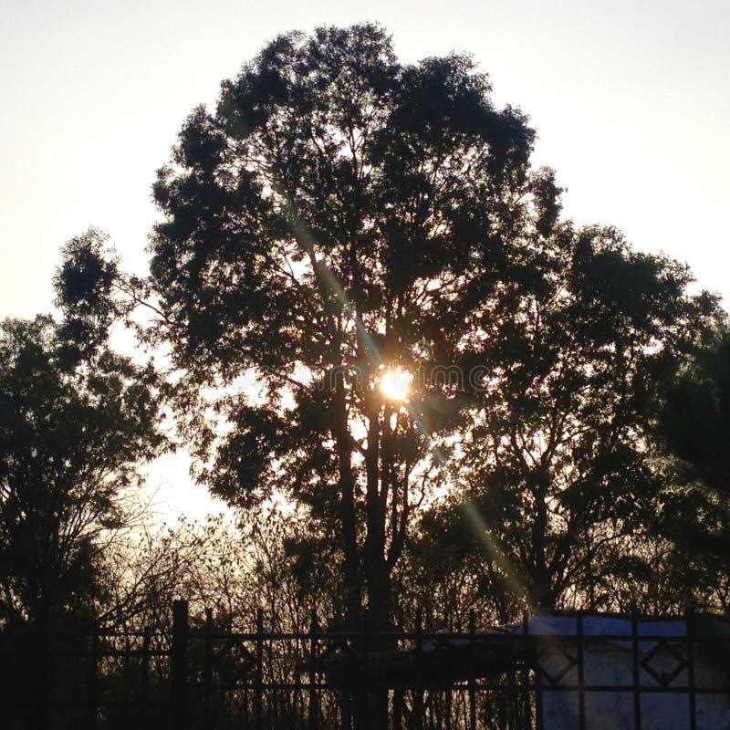 Sun derrière l'arbre image stock