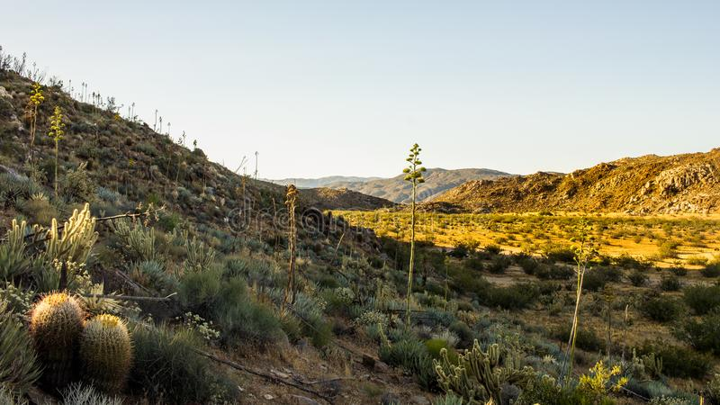 Sun di mattina sul deserto di Anza Borrego fotografia stock