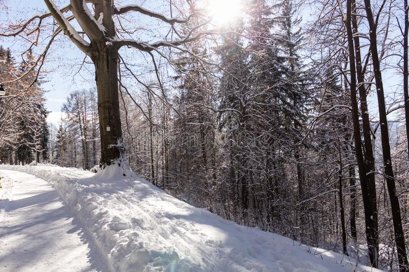 Sun-drenched winter landscape covered with snow on trees.  stock photos