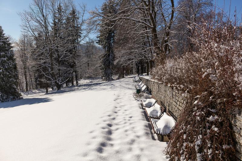 Sun-drenched winter landscape covered with snow on trees.  stock photo