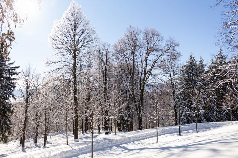 Sun-drenched winter landscape covered with snow on trees.  stock photography