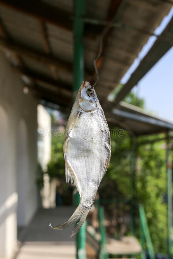 Sun-dried salted fish in the air royalty free stock photography