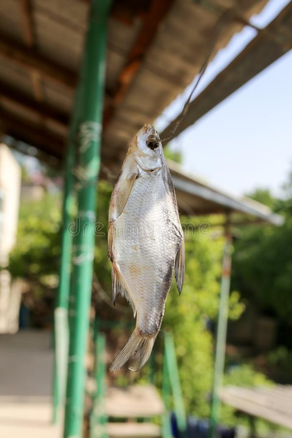 Sun-dried salted fish in the air stock photos