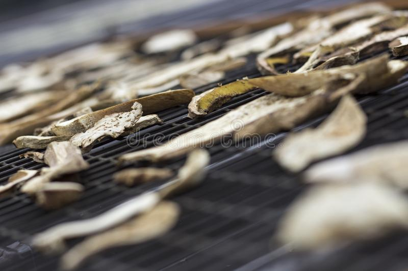 Sun-drying boletes Boletales on a roof. Delicious food on dried royalty free stock photo