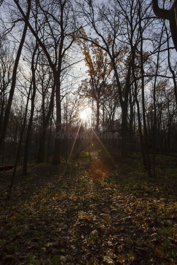 Sun durante puesta del sol fotos de archivo
