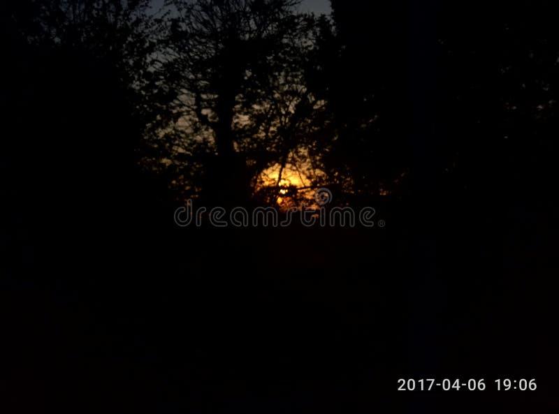 Sun durch den Wald lizenzfreie stockfotografie
