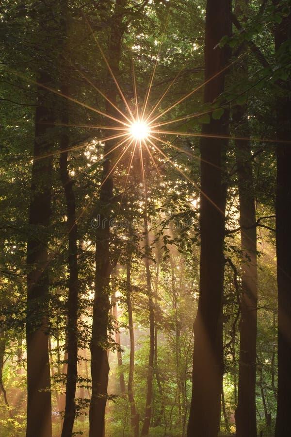 Sun e foresta fotografie stock libere da diritti