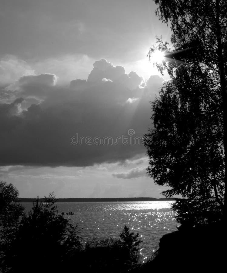 Sun e l'albero - foto in bianco e nero immagine stock