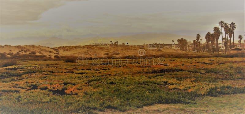 Sun e máscara no deserto bonito do Arizona foto de stock royalty free