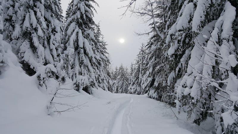 Sun e neve no assobiador, BC imagem de stock royalty free